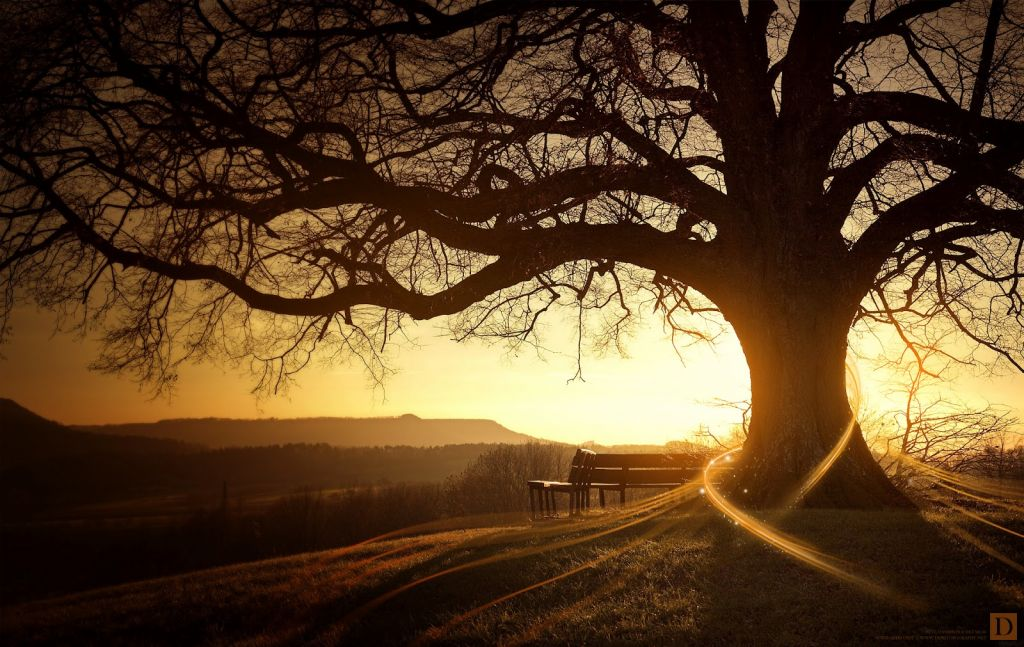 5286_landscape_hd_wallpapers_tree_sunset_sunrise