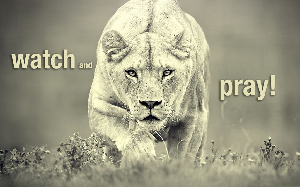 watch-pray-lioness-attack-wallpaper_1920x1200