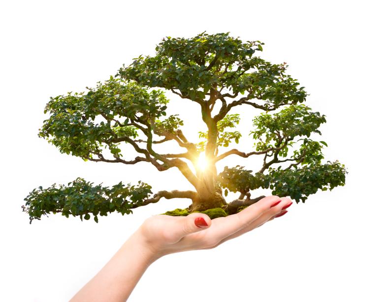 treeoflifeinyou