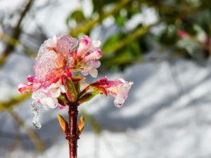 吉隆坡卫理公会 (粤音堂)的俞书发牧师博士:生命也是有冬季的时候